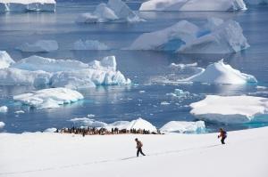 Frio Antárctico e calor dos pinguins